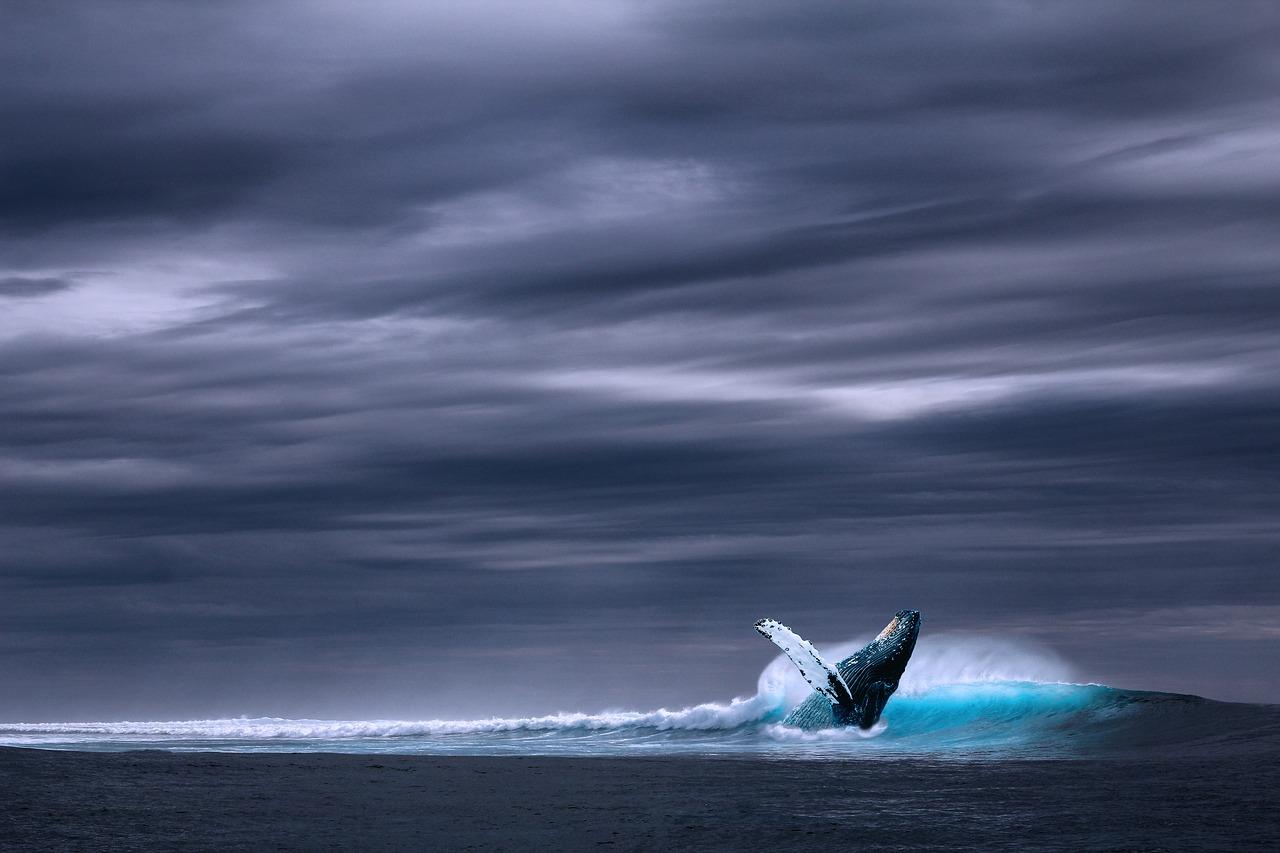 Ballena en paisaje con mar