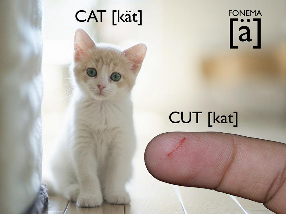 Corte O Gato Aprende A Pronunciar El Fonema Inglés ä