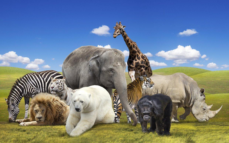 English Idioms: Expresiones con animales en inglés