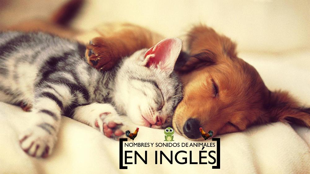 Animales en inglés: vocabulario