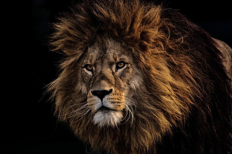 """Los animales en inglés: Las expresiones más """"salvajes"""""""
